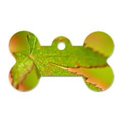 Leaf Dog Tag Bone (one Sided)