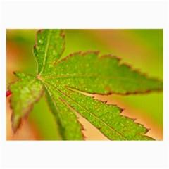 Leaf Glasses Cloth (Large)