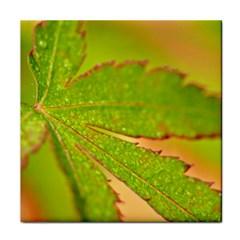 Leaf Face Towel