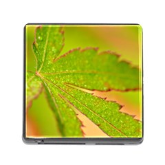Leaf Memory Card Reader with Storage (Square)