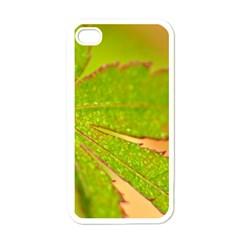 Leaf Apple Iphone 4 Case (white)