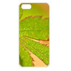 Leaf Apple iPhone 5 Seamless Case (White)