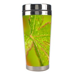 Leaf Stainless Steel Travel Tumbler