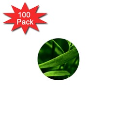 Bamboo 1  Mini Button (100 Pack)