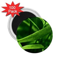 Bamboo 2.25  Button Magnet (100 pack)