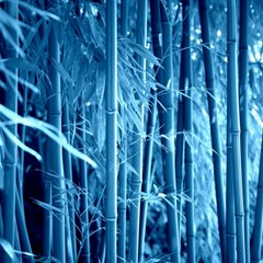 Blue Bamboo Canvas 20  X 20  (unframed)