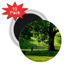 Trees 2.25  Button Magnet (10 pack)