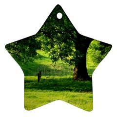 Trees Star Ornament (Two Sides)