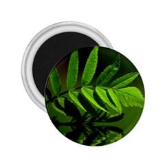 Leaf 2 25  Button Magnet