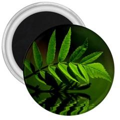 Leaf 3  Button Magnet