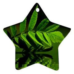 Leaf Star Ornament