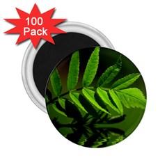 Leaf 2 25  Button Magnet (100 Pack)