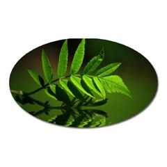 Leaf Magnet (Oval)