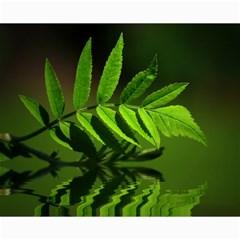 Leaf Canvas 16  x 20  (Unframed)