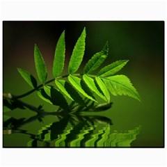 Leaf Canvas 11  x 14  (Unframed)