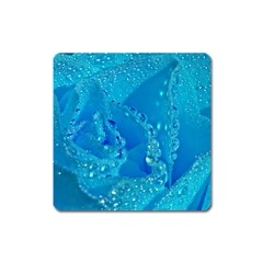Blue Rose Magnet (Square)
