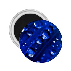 Waterdrops 2.25  Button Magnet