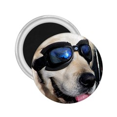 Cool Dog  2.25  Button Magnet