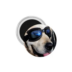 Cool Dog  1.75  Button Magnet