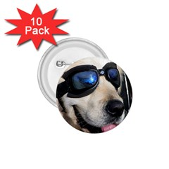 Cool Dog  1 75  Button (10 Pack)