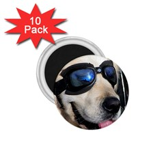 Cool Dog  1.75  Button Magnet (10 pack)