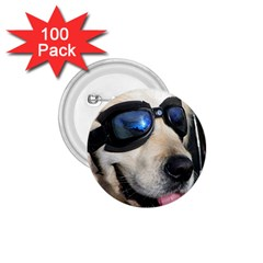 Cool Dog  1.75  Button (100 pack)