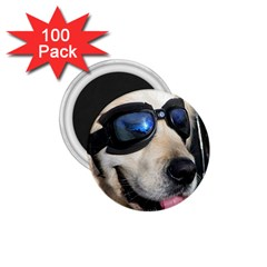 Cool Dog  1 75  Button Magnet (100 Pack)
