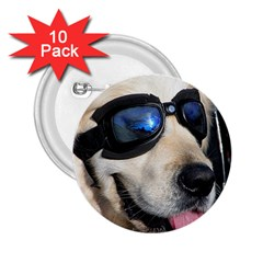 Cool Dog  2 25  Button (10 Pack)