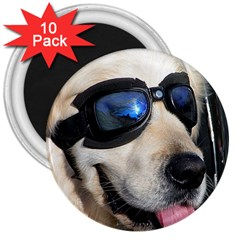 Cool Dog  3  Button Magnet (10 pack)