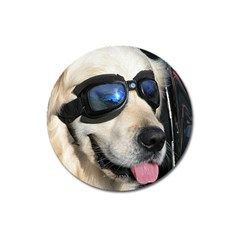 Cool Dog  Magnet 3  (round)