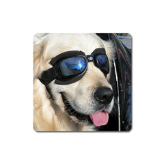Cool Dog  Magnet (Square)