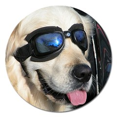 Cool Dog  Magnet 5  (Round)