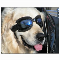 Cool Dog  Canvas 8  x 10  (Unframed)