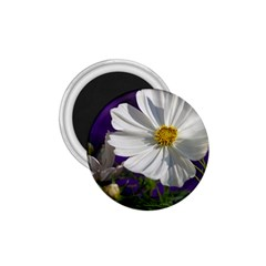 Cosmea   1.75  Button Magnet