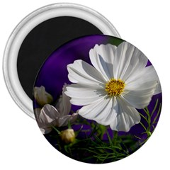 Cosmea   3  Button Magnet