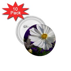Cosmea   1 75  Button (10 Pack)