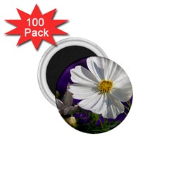 Cosmea   1.75  Button Magnet (100 pack)