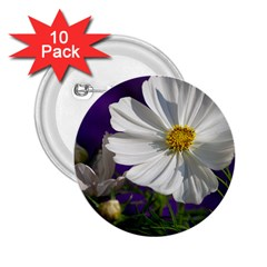 Cosmea   2.25  Button (10 pack)