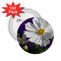 Cosmea   2.25  Button (100 pack)