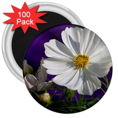 Cosmea   3  Button Magnet (100 pack)