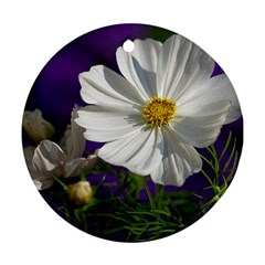 Cosmea   Round Ornament (Two Sides)