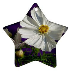 Cosmea   Star Ornament (Two Sides)