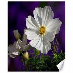 Cosmea   Canvas 16  x 20  (Unframed)