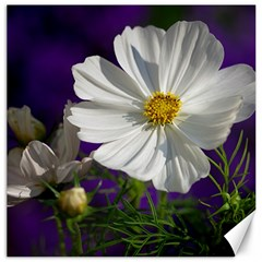 Cosmea   Canvas 20  X 20  (unframed)