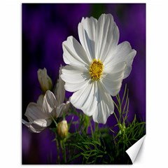 Cosmea   Canvas 18  x 24  (Unframed)