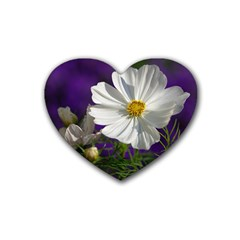 Cosmea   Drink Coasters 4 Pack (heart)