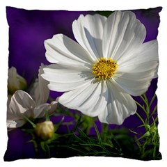 Cosmea   Large Cushion Case (Two Sided)
