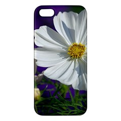 Cosmea   Iphone 5 Premium Hardshell Case