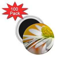 Daisy With Drops 1.75  Button Magnet (100 pack)