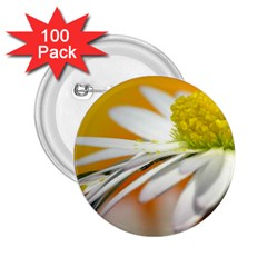 Daisy With Drops 2.25  Button (100 pack)